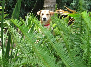 Loratadine Dosage For Small Dogs