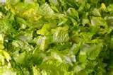 Creamy Balsamic Vinegar Salad